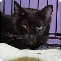 Adopt A Pet :: Beckett - Ocean City, NJ