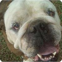 Adopt A Pet :: Petunia - Winder, GA