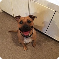 Adopt A Pet :: THEODORE (THEO) - Boca Raton, FL