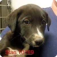 Adopt A Pet :: Stan - Greencastle, NC