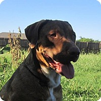Adopt A Pet :: Moxie - Copperas Cove, TX