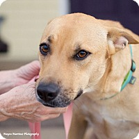 Adopt A Pet :: Rosalie - Knoxville, TN