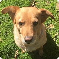 Adopt A Pet :: Mari - New Canaan, CT