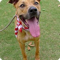 Adopt A Pet :: Elliott - Helena, AL