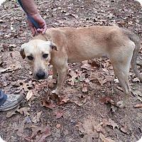 Adopt A Pet :: Mikey meet me 11/18 - Manchester, CT