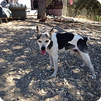 Adopt A Pet :: Odie - Creston, CA