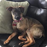 Adopt A Pet :: Anna - Grafton, WI