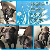 Adopt A Pet :: LUGHIE - Kenansville, NC