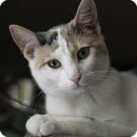 Adopt A Pet :: Sarah - Oak Park, IL