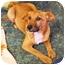 Photo 2 - Golden Retriever Mix Puppy for adoption in Philadelphia, Pennsylvania - Angus