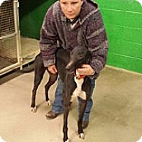 Adopt A Pet :: Lenore WV - Knoxville, TN