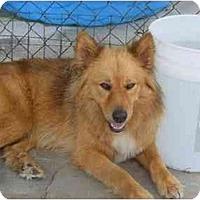 Adopt A Pet :: June - Alexandria, VA