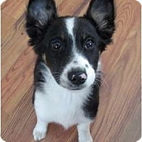 Adopt A Pet :: Willow - Glenrock, WY