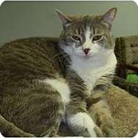 Adopt A Pet :: Cee Cee - Hamburg, NY