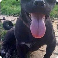 Adopt A Pet :: Taz - Fowler, CA