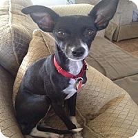 Adopt A Pet :: Gianna - Phoenix, AZ