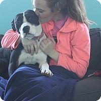 Adopt A Pet :: Kiwi - Chicago, IL