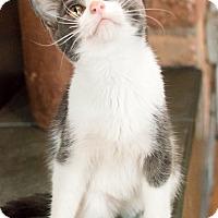Adopt A Pet :: Bennie - Chicago, IL
