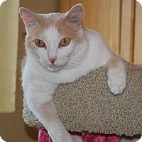 Domestic Shorthair Cat for adoption in Prescott, Arizona - Charlie