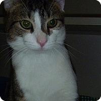 Adopt A Pet :: Ginger Snap - Hamburg, NY