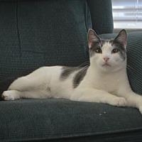 Adopt A Pet :: Flor - Spring, TX