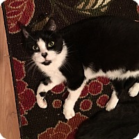 Adopt A Pet :: Dottie - Adoption Pending - Horsham, PA