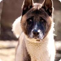 Adopt A Pet :: Kino - Toms River, NJ
