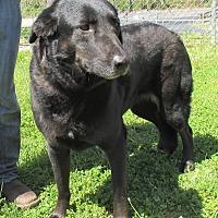 Adopt A Pet :: Angel - Reeds Spring, MO