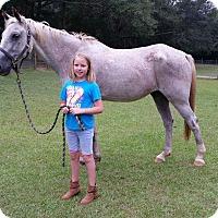 Adopt A Pet :: Dusty - Cantonment, FL