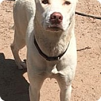 Adopt A Pet :: Jazzy Jasmine - Sylacauga, AL