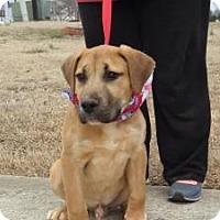 Adopt A Pet :: Moose - New Boston, NH