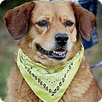 Adopt A Pet :: Eedie-local! - East Hartford, CT