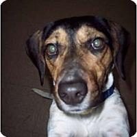 Adopt A Pet :: Dawn - Douglas, MA