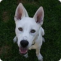 Adopt A Pet :: Nik - Hastings, NY