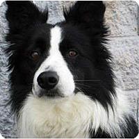 Adopt A Pet :: Mirk - Glenrock, WY