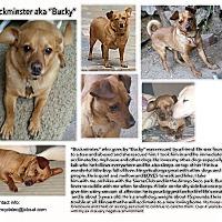 Adopt A Pet :: Bucky - Los Angeles, CA