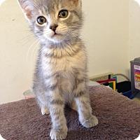 Adopt A Pet :: Jax - Bentonville, AR