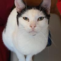 Adopt A Pet :: LIL BIT - San Pablo, CA