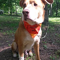 Australian Cattle Dog Mix Dog for adoption in Capon Bridge, West Virginia - Biscuit Basket