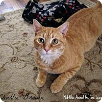 Adopt A Pet :: Charlie Brown - Mansfield, OH
