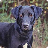 Adopt A Pet :: *Heidi - PENDING - Westport, CT