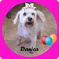 Adopt A Pet :: Danica - Greensboro, GA