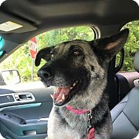 Adopt A Pet :: Naomi - Nashua, NH
