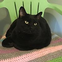 Adopt A Pet :: BlackJack - Temecula, CA