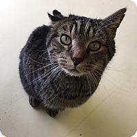 Adopt A Pet :: Big Boy - Newburgh, IN