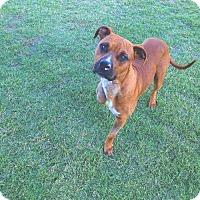 Adopt A Pet :: Scruff - tucson, AZ