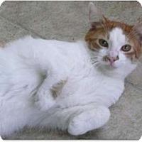Adopt A Pet :: Frankie - Makawao, HI
