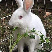 Adopt A Pet :: Memphis - Huntsville, AL