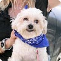 Adopt A Pet :: Butch - Santa Monica, CA