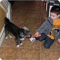 Adopt A Pet :: JR in San Antonio - Houston, TX
